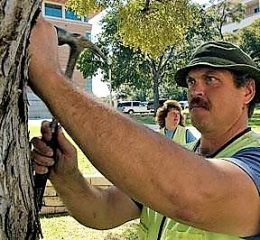 Project Manager - Board Certified Master Arborist