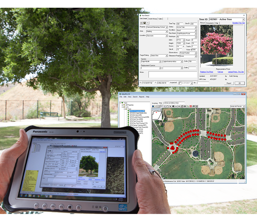 tree inventory software
