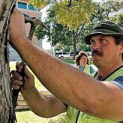 ArborPro Arborist Scot