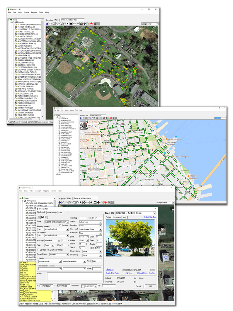 tree management software
